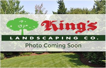King Landscape